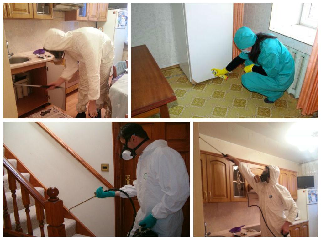 Красные муравьи в квартире как избавиться в домашних условиях